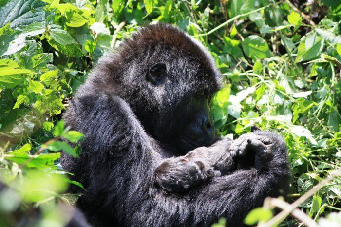 UGANDA, RWANDA E CONGO