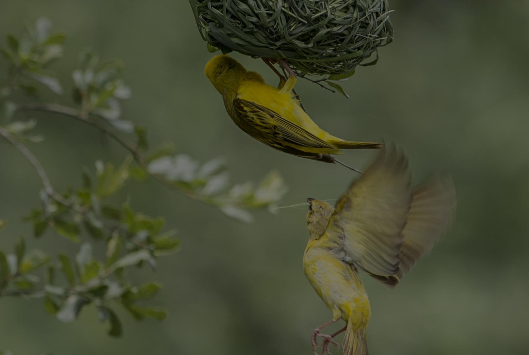 Insafari uccelli