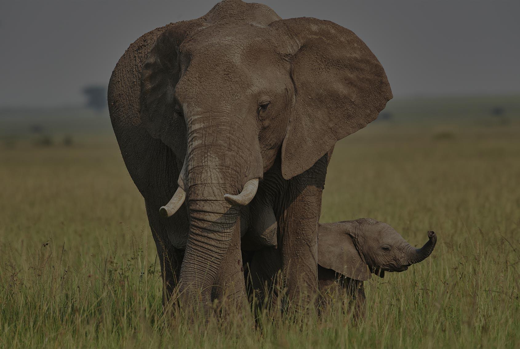 Insafari elefanti