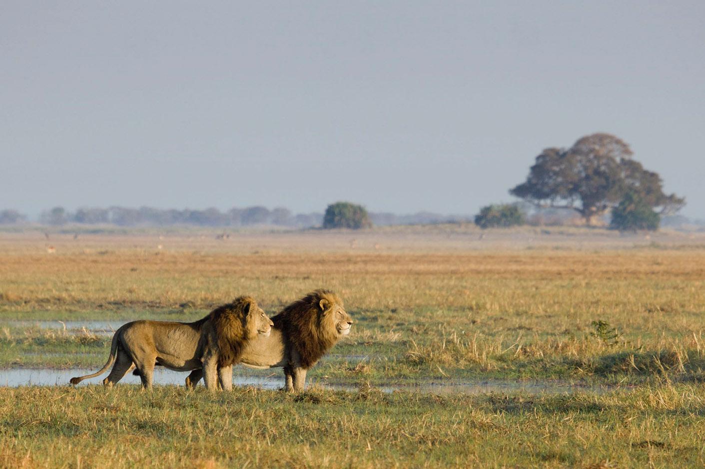 ZAMBIA - Kafue - La grande avventura