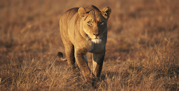 African Safari image