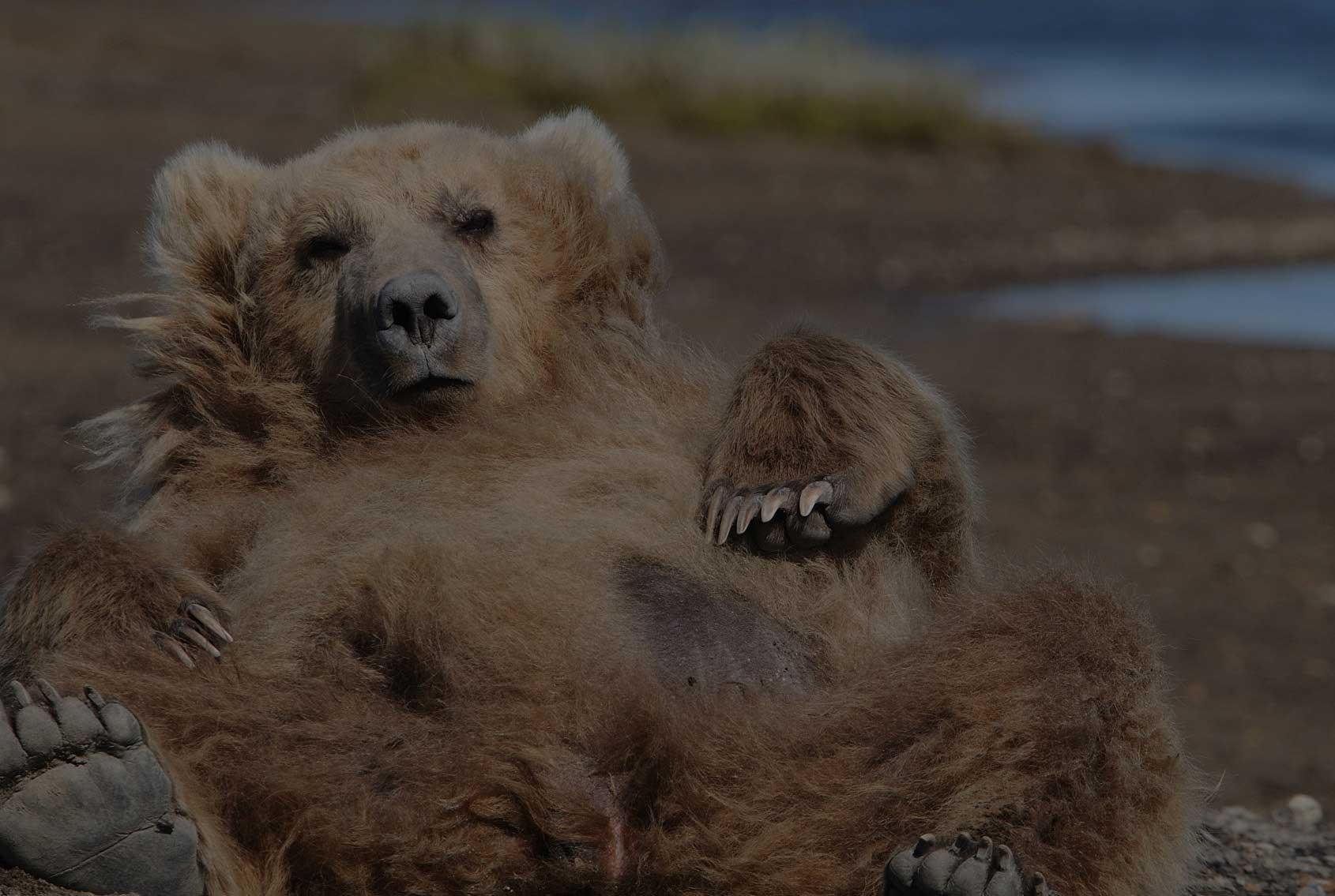 Orso Alaska