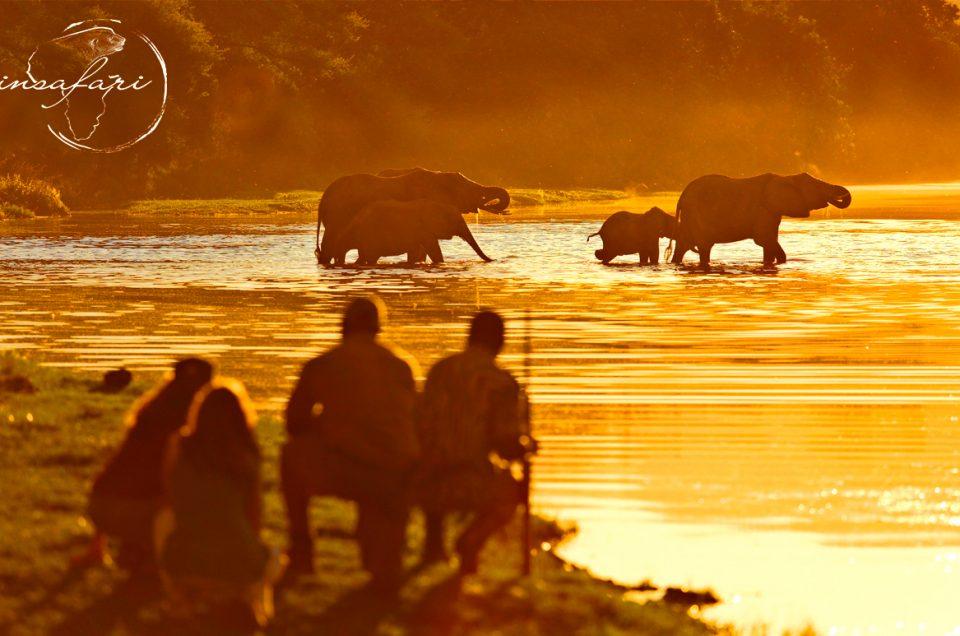 Avventure InSafari: Il safari a piedi
